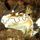 Glossodoris atromarginata by MattTworkowski