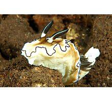 Glossodoris atromarginata Photographic Print