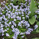Sweet Forget-Me-Nots by BlueMoonRose