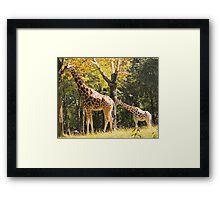 Mama Giraffe Framed Print