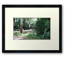 Black Lagoon Framed Print