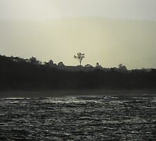 Sillouette of a tree in the afternoon light on the coast by Richard  Willett