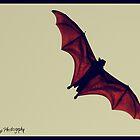 The Dark Knight by sandy1984