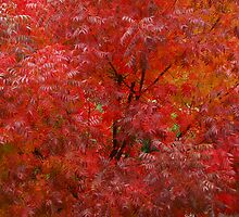Autumn Amazement by Richard  Stanley