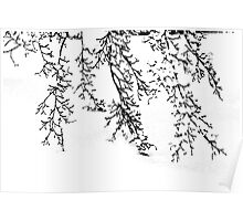 Japanese Maple in the Snow Poster