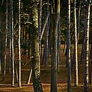A Grove of Trees by cclaude
