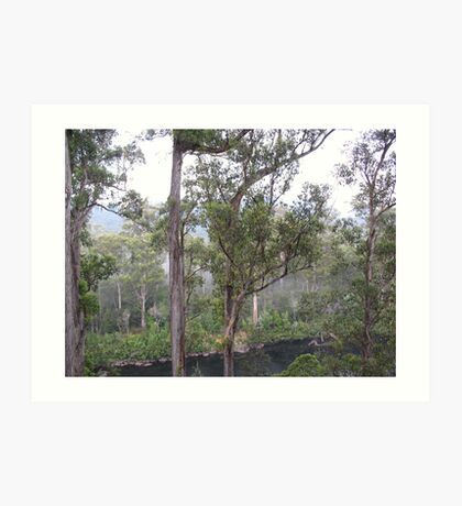 Trees Huon Valley Art Print