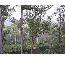 Trees Huon Valley Photographic Print