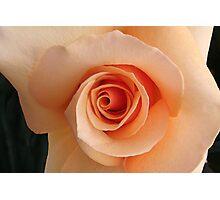 irresistible rose Photographic Print