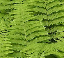 Ferns Fairway by jenndes