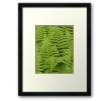 Ferns Fairway Framed Print