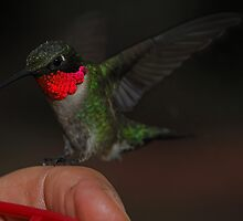 Four Point Landing by Dennis Jones - CameraView