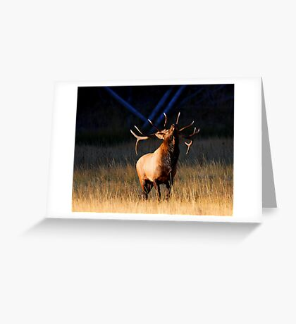 Charging at Sunrise Greeting Card