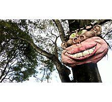 Smiling tree Photographic Print