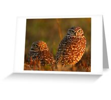 Burrowing Owl Couple at Sunset Greeting Card