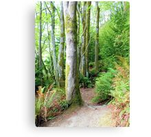 Washington State Park Canvas Print