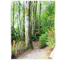 Washington State Park Poster