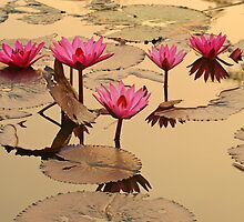 Water Lillies W/Golden Glow by Robert George