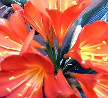 ...tender age in bloom... [P1200565 _XnView] by Juan Antonio Zamarripa