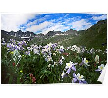 Field of Columbines Poster