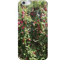 Red Delicious Apple Trees iPhone Case/Skin