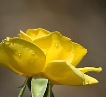 Perfect Yellow by Donna Adamski
