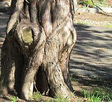 Grumpy tree by stlmoon
