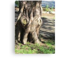 Grumpy tree Canvas Print