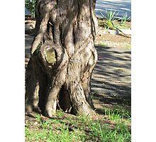 Grumpy tree Photographic Print