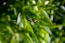 Orb Weaver - Spider on its Web by RatManDude