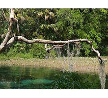 Mossy Bridge Photographic Print