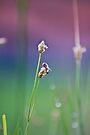 Honeybee Collecting Nectar by RatManDude