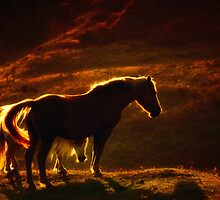 Horses in Sunset, Peak District by Thomas Peter