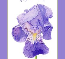 Purple Iris Mother's Day by Mariana Musa