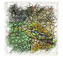 The Atlas of Dreams - Color Plate 174 Photographic Print