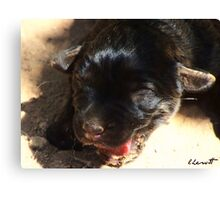 What a Funny Face!! Canvas Print