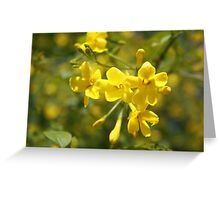 Fragrant Yellow Flowers Of Carolina Jasmine  Greeting Card