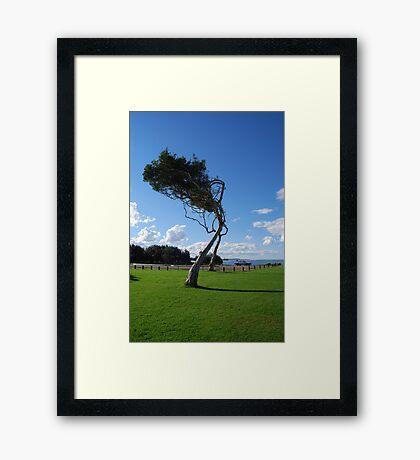 Saltwater Tree Framed Print