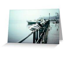 Seagulls 2 Greeting Card