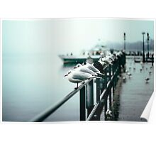 Seagulls 2 Poster