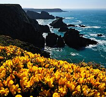 Colours, Pembrokeshire by Thomas Peter