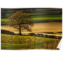 Winter Fields, Cotswold Poster