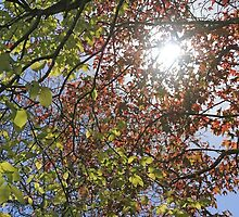Autumn sunlight by manifold53
