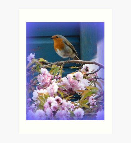 Robin on Cherry Tree Art Print