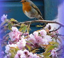 Robin on Cherry Tree by ElsT