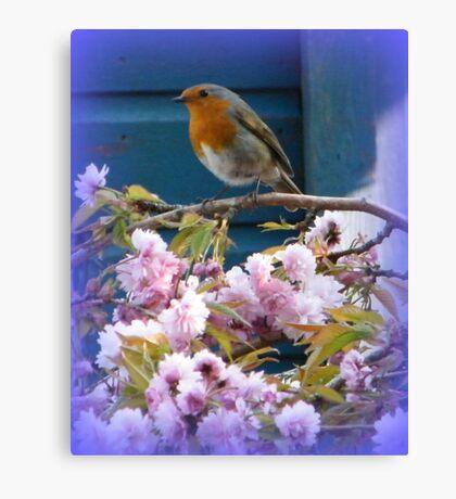 Robin on Cherry Tree Canvas Print