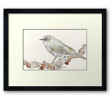 Cape White Eye (Witogie) Framed Print