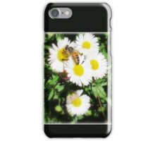 Bee Collecting on Seaside Daisy iPhone Case/Skin