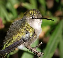 O Sweet Hummer by Judy Grant