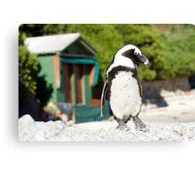 Penguin Shack Cape Town Canvas Print